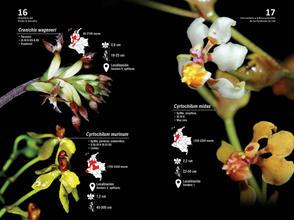 Guia de orquideas del Danubio9.jpg