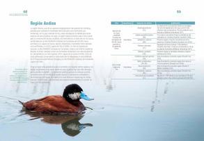 Aves acuaticas de Colombia final junio baja _Página_35.jpg