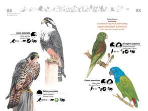 Libro de aves de Cali43.jpg
