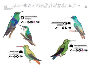 Libro de aves de Cali27.jpg