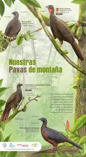 Afiche pavas para la pagina web.jpg