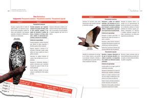 Proyectos pedagogicos de aula final baja21.jpg
