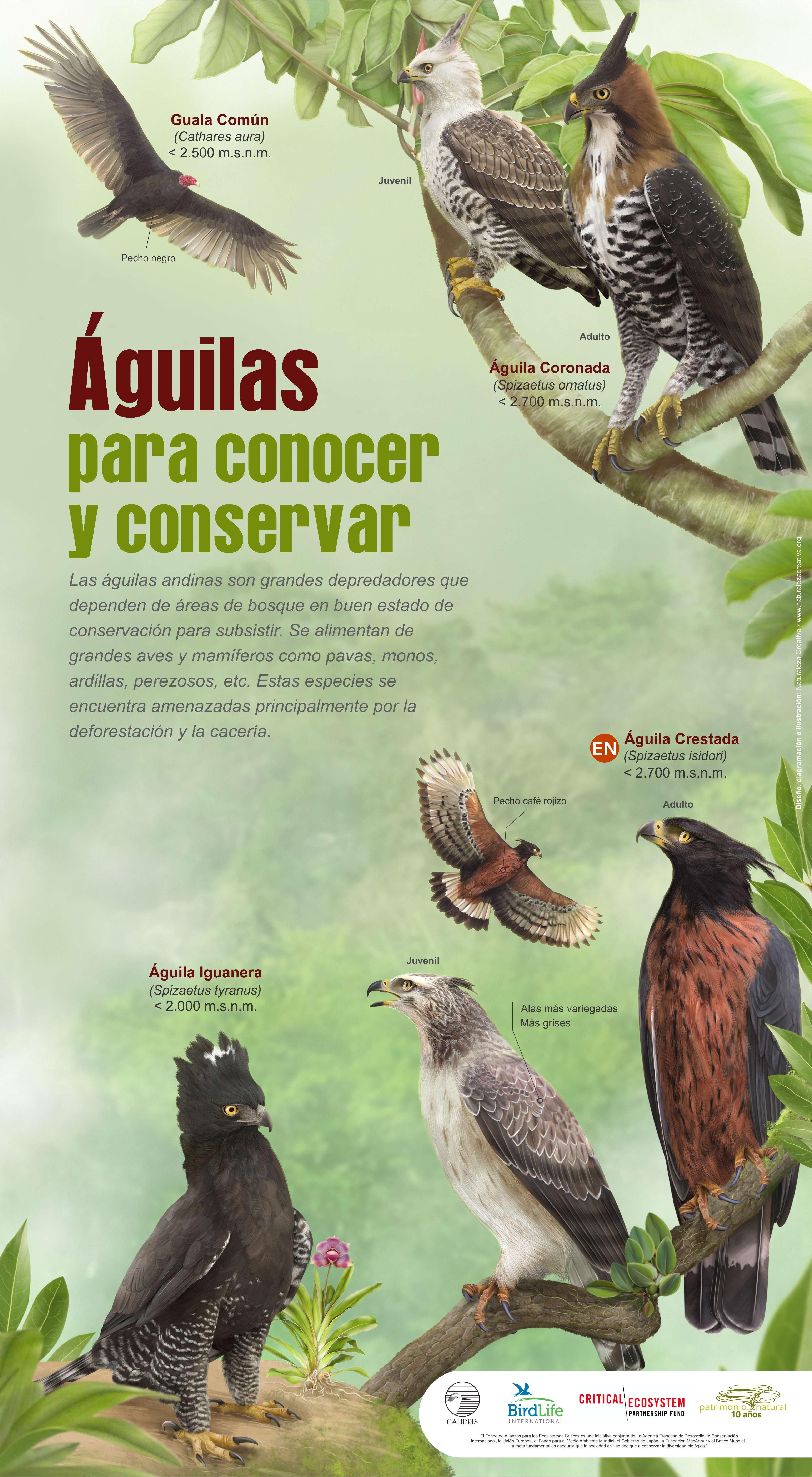 Águilas para conocer y conservar