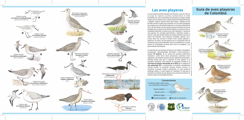 Plegable aves playeras tiro