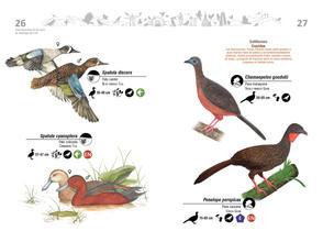 Libro de aves de Cali14.jpg