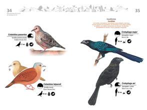 Libro de aves de Cali18.jpg