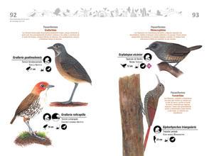 Libro de aves de Cali47.jpg