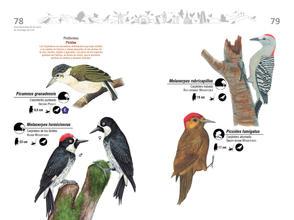 Libro de aves de Cali40.jpg