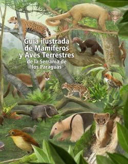 Mamíferos y aves Serranía Paraguas