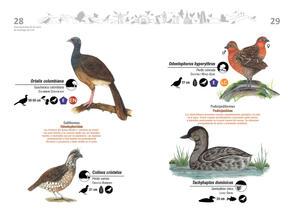 Libro de aves de Cali15.jpg