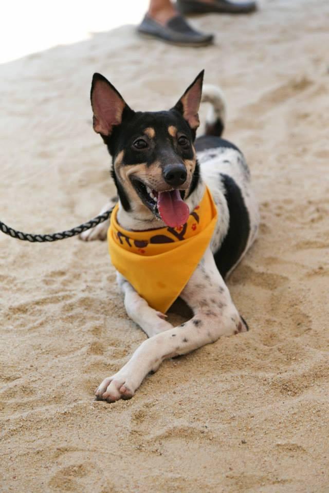 Kane Ian @ Animal Lovers League Adoption Drive - Tanjong Beach Club (Sept 27th) 34