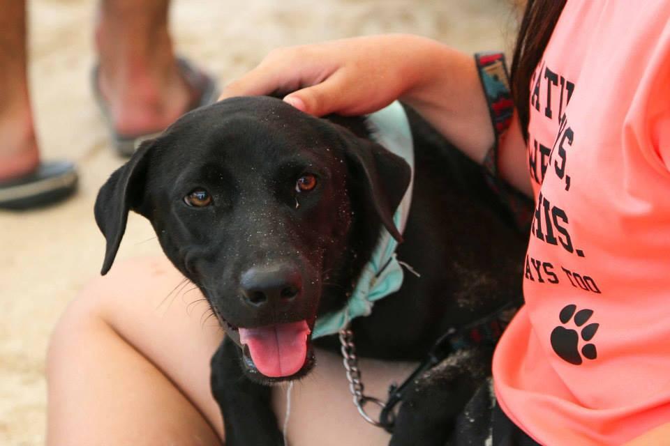 Kane Ian @ Animal Lovers League Adoption Drive - Tanjong Beach Club (Sept 27th) 6