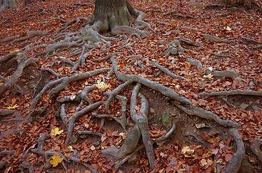 roots-900653_1280.jpg
