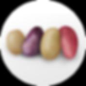 bulk_0000_bulk-grammer.png