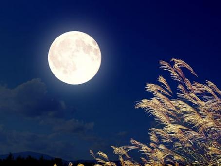 月を見上げて・・・