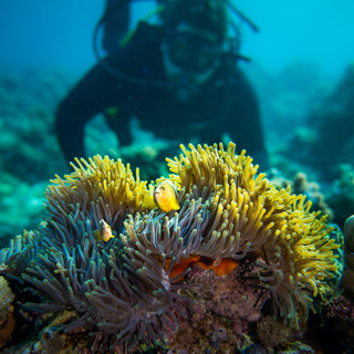 diver-coral-manta-resort.jpg