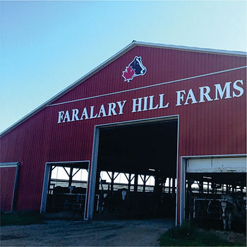 FARM IMAGE - faralary.jpg