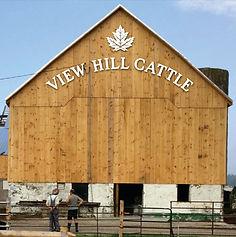 FARM IMAGE - VIEW HILL CATTLE.jpg