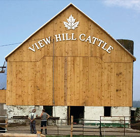 FARM IMAGE - VIEW HILL CATTLE.jpg