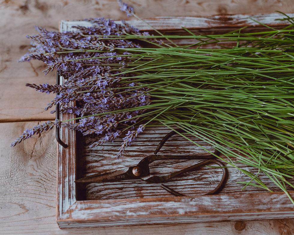 lavender harvest-1.jpg