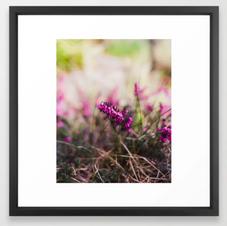 Tiny Magenta Blooms
