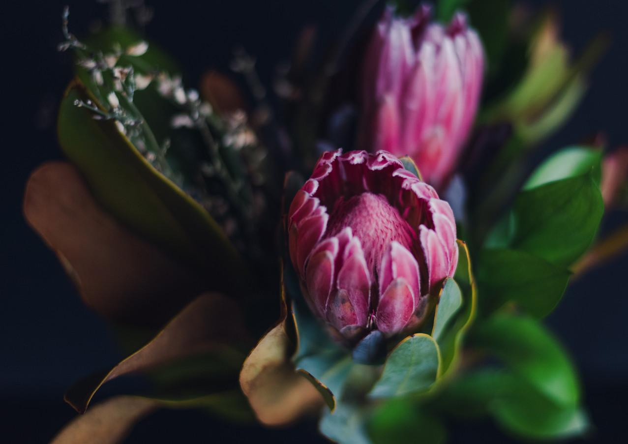Blooming Proteus Flower.jpg
