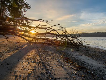 Landscape Shoot: Winter Beach Walk