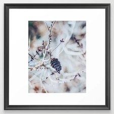 Wintery Pine