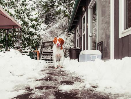 Portrait Shoot: Puppy Winter Wonderland