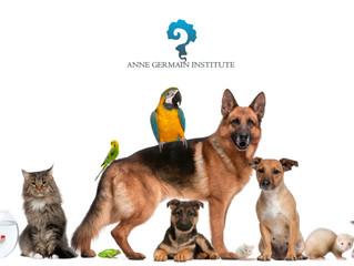 Reiki gratuito para animales