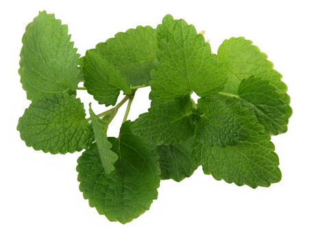 Menthe poivrée ou mentha piperata, l'huile essentielle incontournable !