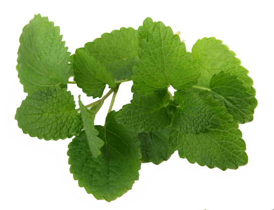 peppermint helps digestion, mental clarity and smells good
