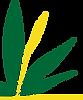 Ginger Leaf_logo.png