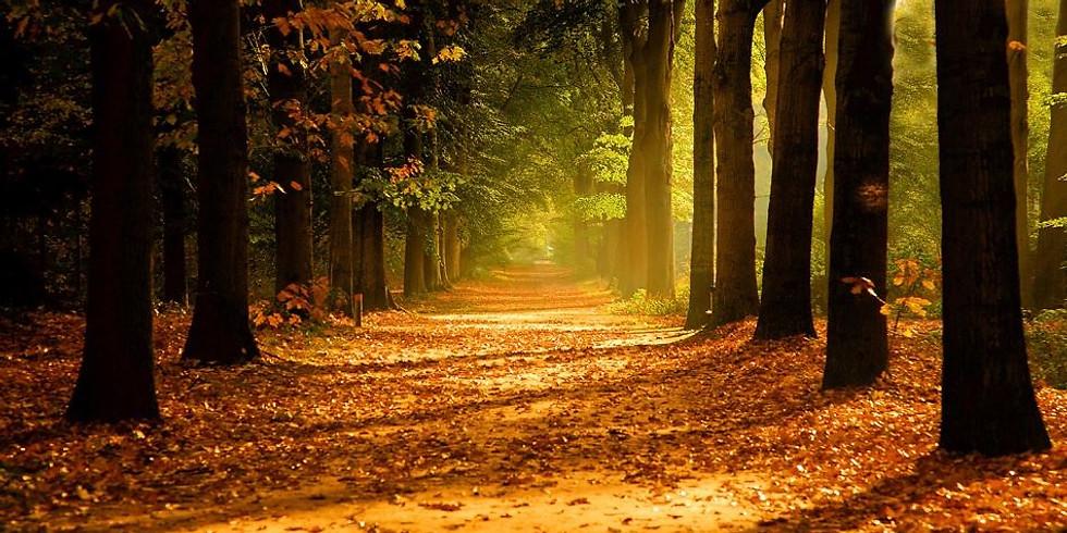 Forest Walk in 'Oude Warande'
