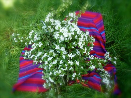 Bloomin' hedge work...