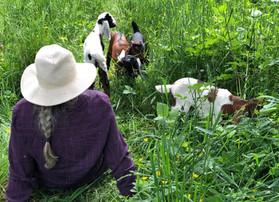 The Secret Green Meadow