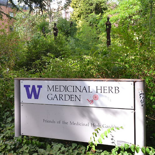 July Herb Walk in the City (Seattle)