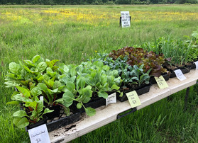 Weaving a Web of Life with Siri Erikson-Brown of Local Roots Farm