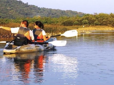 MESSAGES FROM THE MANGROVES: KAYAKING GOA'S BACKWATERS