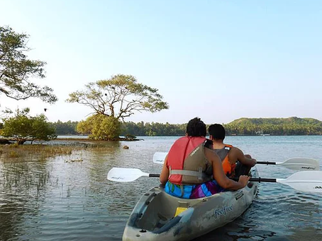 Go Kayaking Through The Mangroves & See A New Side Of Goa