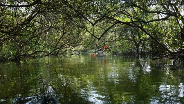 Chapora Mangroves Kayaking
