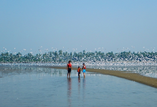 The wintering sea birds' island
