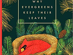 Why Evergreens Keep Their Leaves - Perfect Picture Book Friday #PPBF