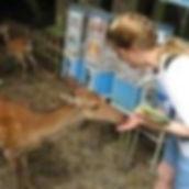 Maria Marshall feeding deer in Nara, Japan