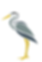 City of Everglades Egret Logo.PNG