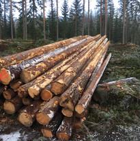 Tømmerdrift på vestsiden av Randsfjorden