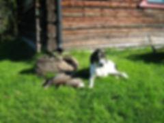 Hund på jakt
