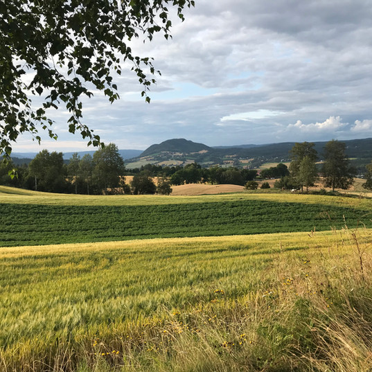 Utsikt fra Tingelstadhøgda