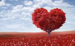 heart-shape-1714807_960_720