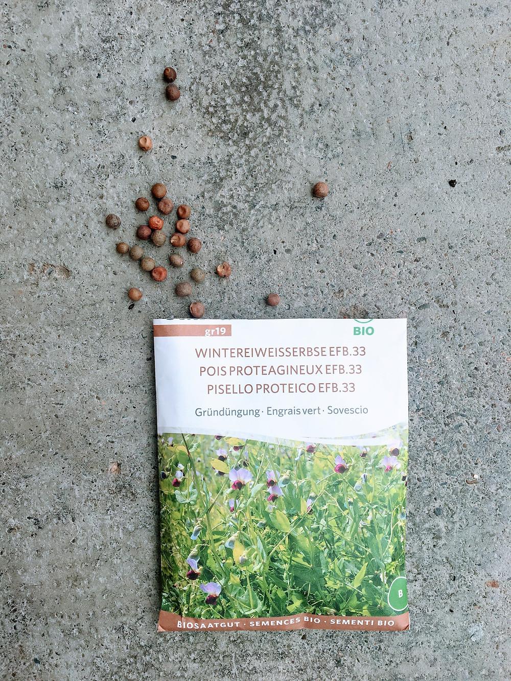 saatgut, bio saatgut, bio samen, sativa rheinau, wintereiweisserbse, gründüngung, stickstoff fixierer, erbse, samen, winter crops, winter ernte